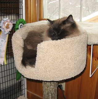 Jimmy_in new bed_0109