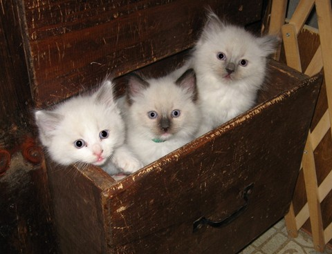 Kittens_in_drawer_www